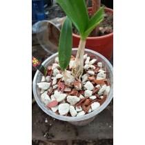 Субстрат для орхидей №2 (Дендробиум, Катлея, Онцидиум) -1 литр