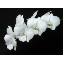 Den.Bangkok White